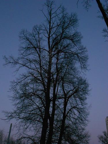одно дерево мин (2)