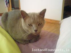 Thu, Oct 10th, 2013 Lost Male Cat - The Local Area, Galbally, Limerick