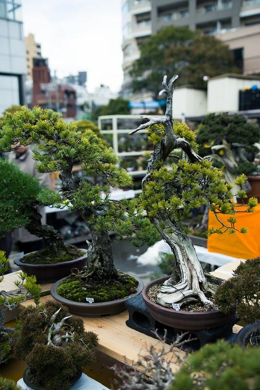 Ueno GreenClub02_20140211