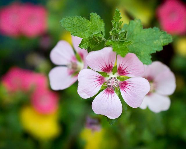 Flowers, Floral, Macro