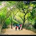 Sober Island Trincomalee - Sri Lanka