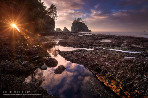 Squint - Shi Shi Beach, Washington