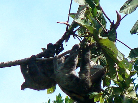 sloths-shot-from-our-porch