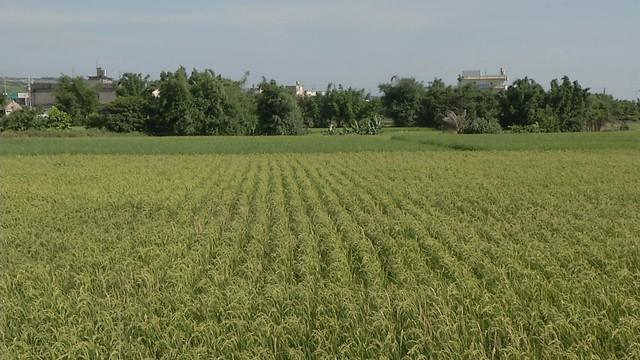 清水農地也曾面臨開發威脅。照片來源:公共電視「我們的島」。