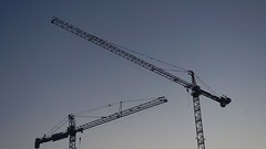 DC Dance of the Cranes 59100