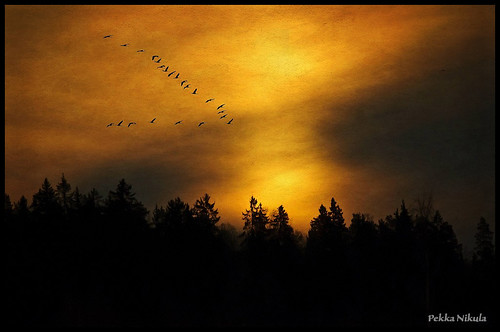 mist bird nature sunrise crane fogg huittinen puurijärvi vigilantphotographersunite vpu2 vpu3
