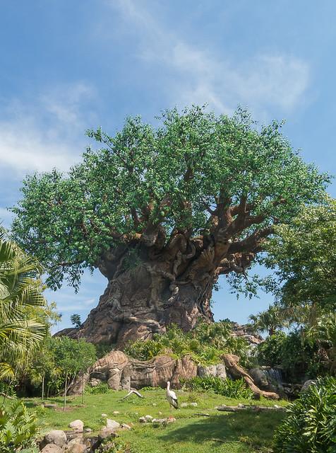 Tree of Life ©2013 Bo Mackison