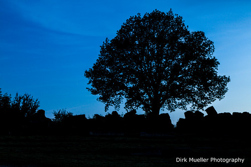 The Tree Of The Blue Time by Dirk Mueller Photography