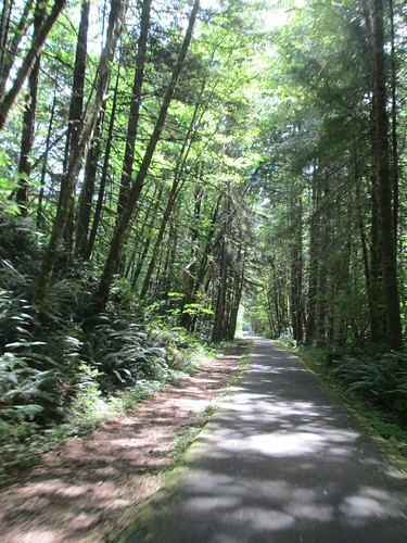 Banks Vernonia Trail with sunlight