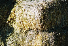 agriculture, straw, hay, grass,