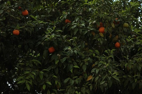 Giardino degli aranci: le arance