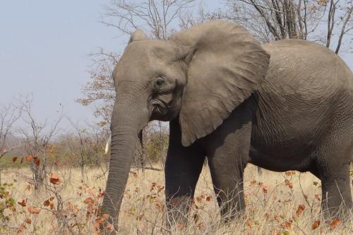 #wokongola #malawi - liwonde national park