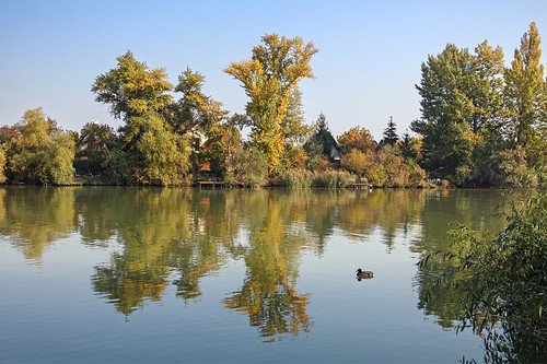 autumn fall nature water leaves reflections river landscape duck hungary day budapest clear duna danube xxi donau csepel 550d