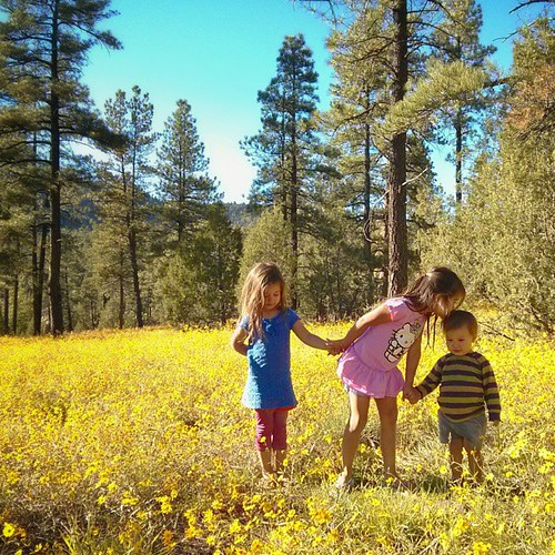 The top of Oak Creek Canyon was blanketed with blooming daisies. We couldn't resist making the kids stand in it.