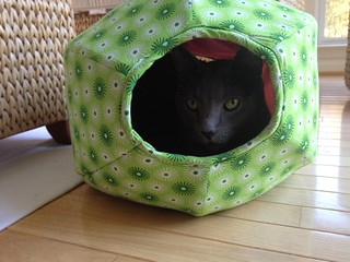 new cat ball