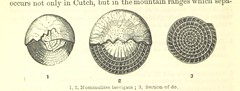 """British Library digitised image from page 236 of """"Advanced Text-book of Geology, descriptive and industrial"""""""