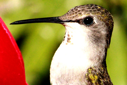 142786-1.jpg by Robert W Gilcrease