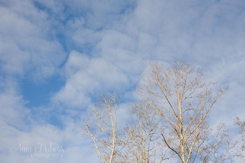 WinterTrees_Jan092014_0015