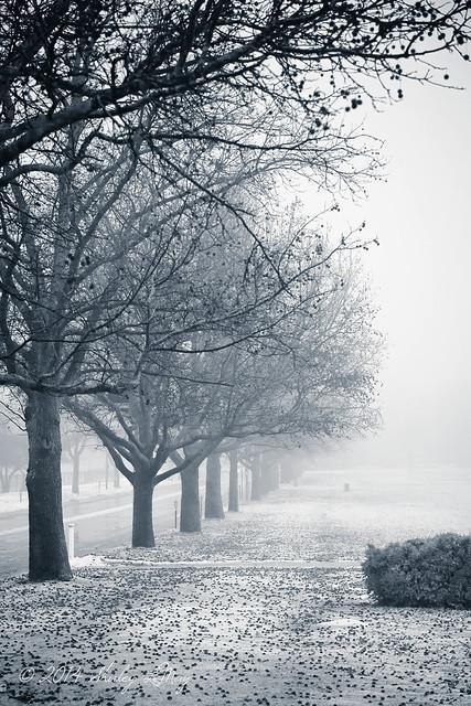 Vanishing #UIUC #Arboretum #Illinois