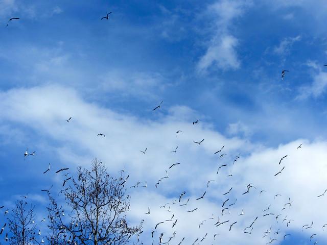 seagulls far from sea