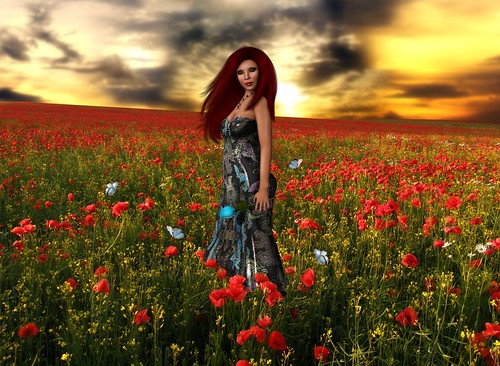 Tremarjeta-she found a blue rose among the poppies by Zipiღbusy