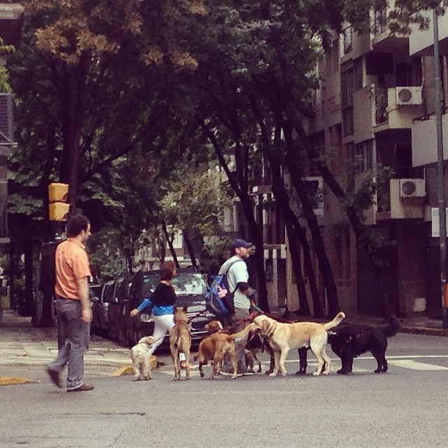 Just a typical morning in #buenosaires...