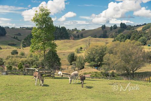 newzealand auckland waitoki visitauckland