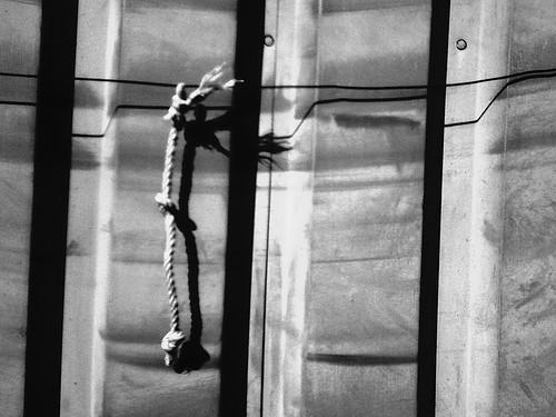 068/365 • rope