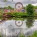 Thurso Fair by Ed the Frog Photography