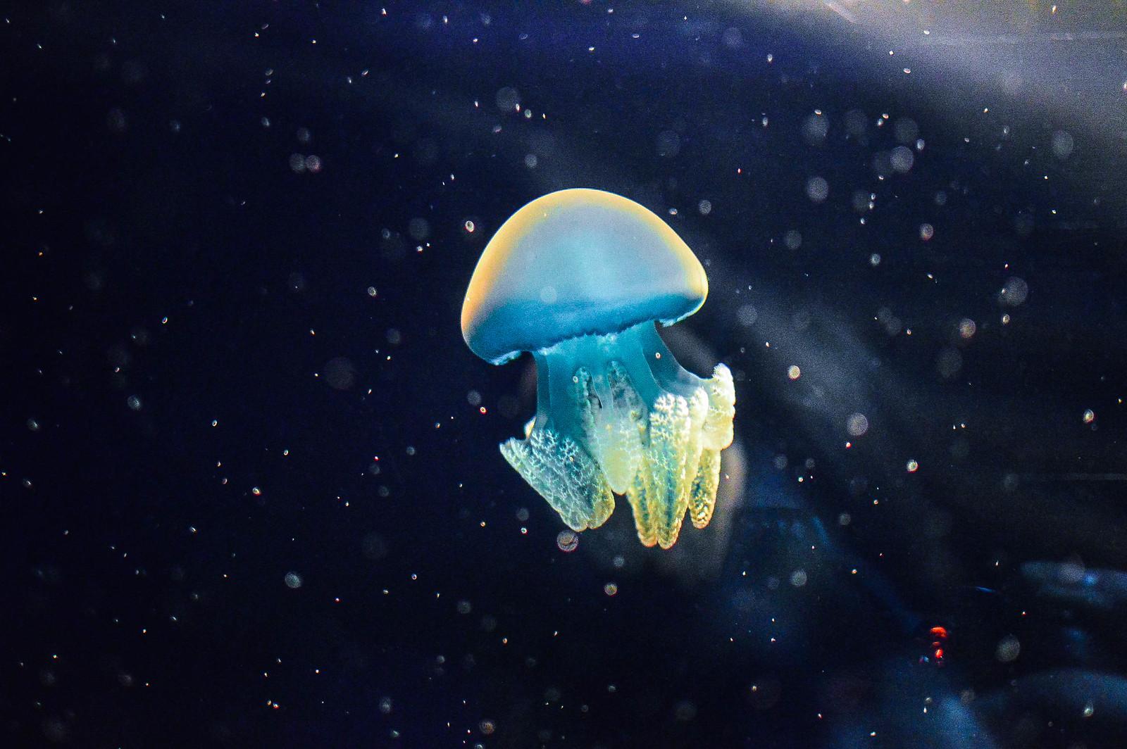 Osaka Aquarium Jellyfish