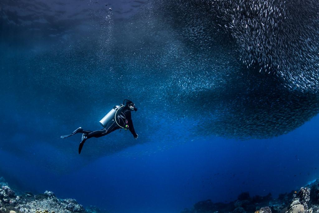 scuba diving in Mactan