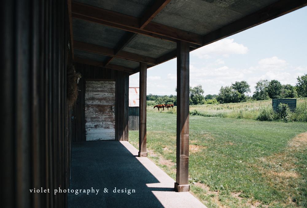horses at the enchanted barn