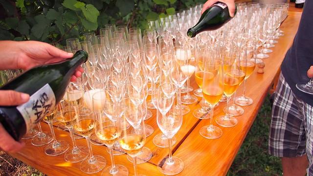 Backyard Vineyards   Langley Passport Wine Tour