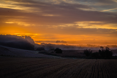 sky orange mist tree field fog clouds sunrise golden sweden layers mystic staffanstorp skånecounty