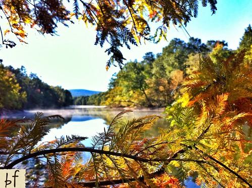 Arkansas Fall