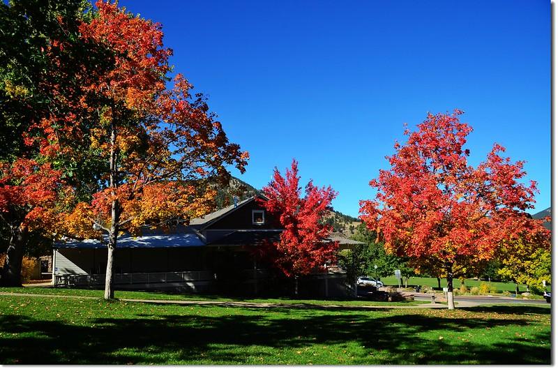 Sugar maple in Fall, Chautauqua, Boulder 10