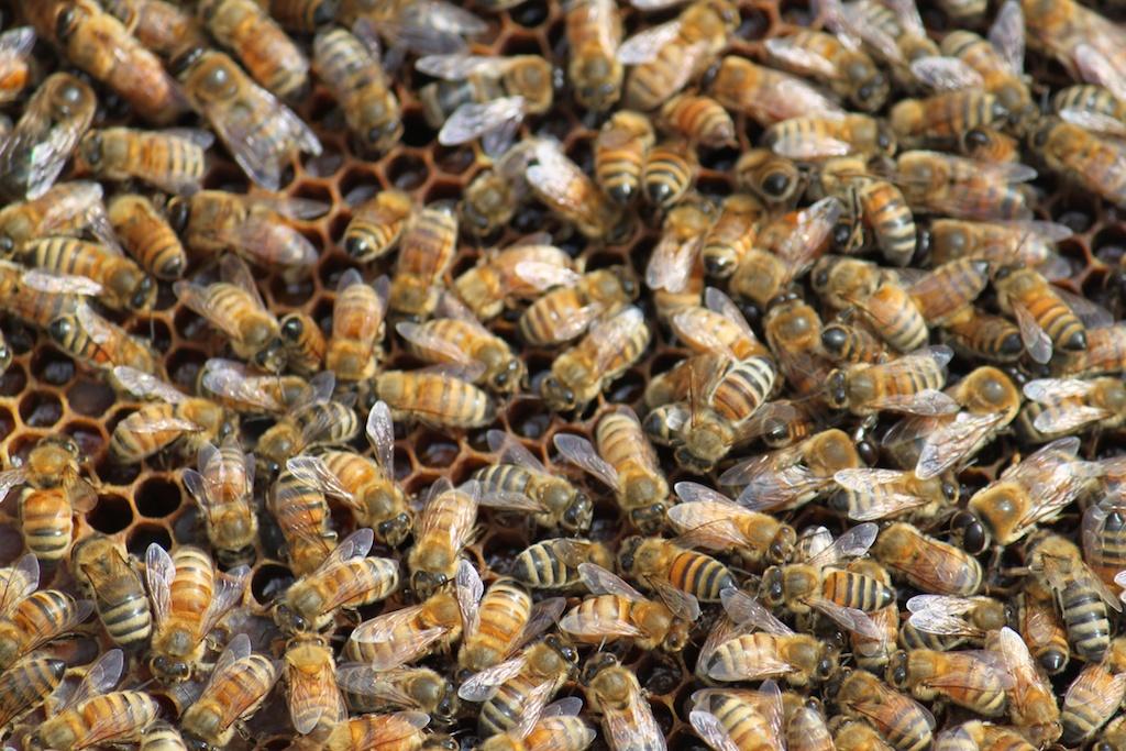 Slide Ridge Bees on Frame