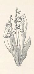 "British Library digitised image from page 164 of ""Les Pyrénées françaises. Illustrations de E. Sadoux"""