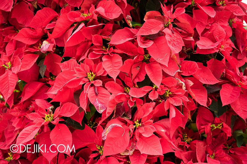Gardens by the Bay - Flower Dome - Christmas Sugar Mountain