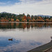 Lost Lagoon in Stanley Park by cecily