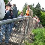 Raccoon climbing the fence