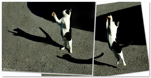 Cat's dance - diptych
