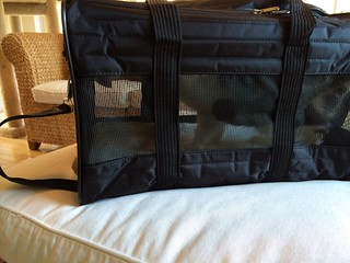 Sherpa Pet product review