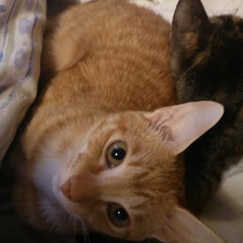 カトルとトロワが膝の上 by Chinobu