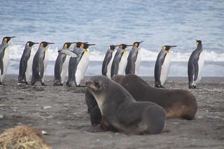 286 Salisbury Plain zeeberen