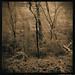 Winter Twilight, Lith&Catechol by Wolfgang Moersch