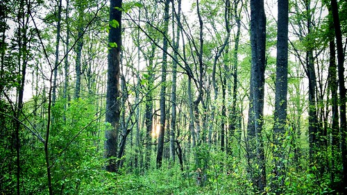 nature forest landscape woods wooded uploaded:by=flickrmobile colorvibefilter flickriosapp:filter=colorvibe