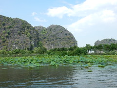 River Vegetation