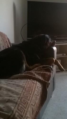 Ruby likes TV