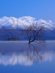 Floating Tree of Wanaka